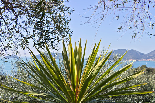 A Dracena in the background of the Ligurian Sea. - MyVideoimage.com | Foto stock & Video footage