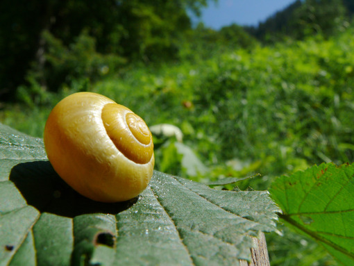 A snail with its snail. - MyVideoimage.com