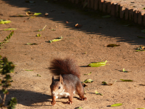 A squirrel in a garden - MyVideoimage.com