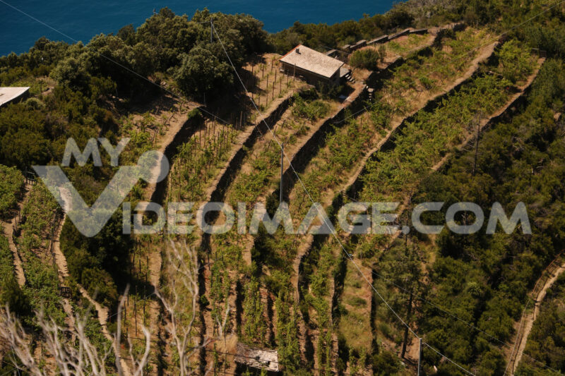 Aerial view of Sciacchetrà Vineyard on the terraced hills of the Cinque Terre in Liguria. - MyVideoimage.com