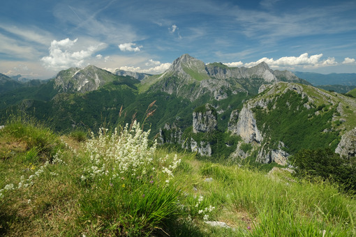 Apuan Alps panorama. Apuan Alps mountains with flower in the foreground. Stock photos. - MyVideoimage.com | Foto stock & Video footage