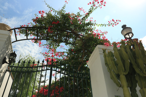 Arbor with a flowering bougainvillea plant. A garden gate domina - MyVideoimage.com