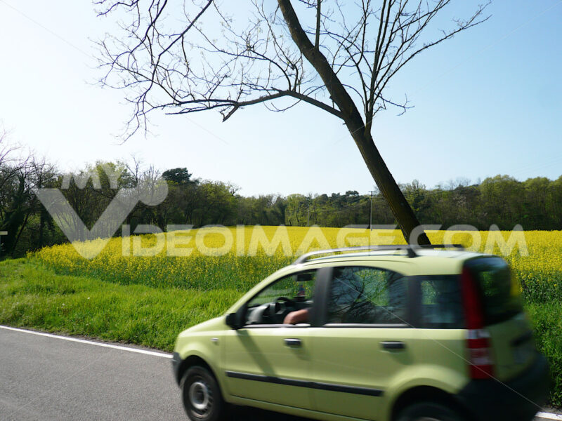 Automobile with a rapeseed field used to produce biodiesel - MyVideoimage.com