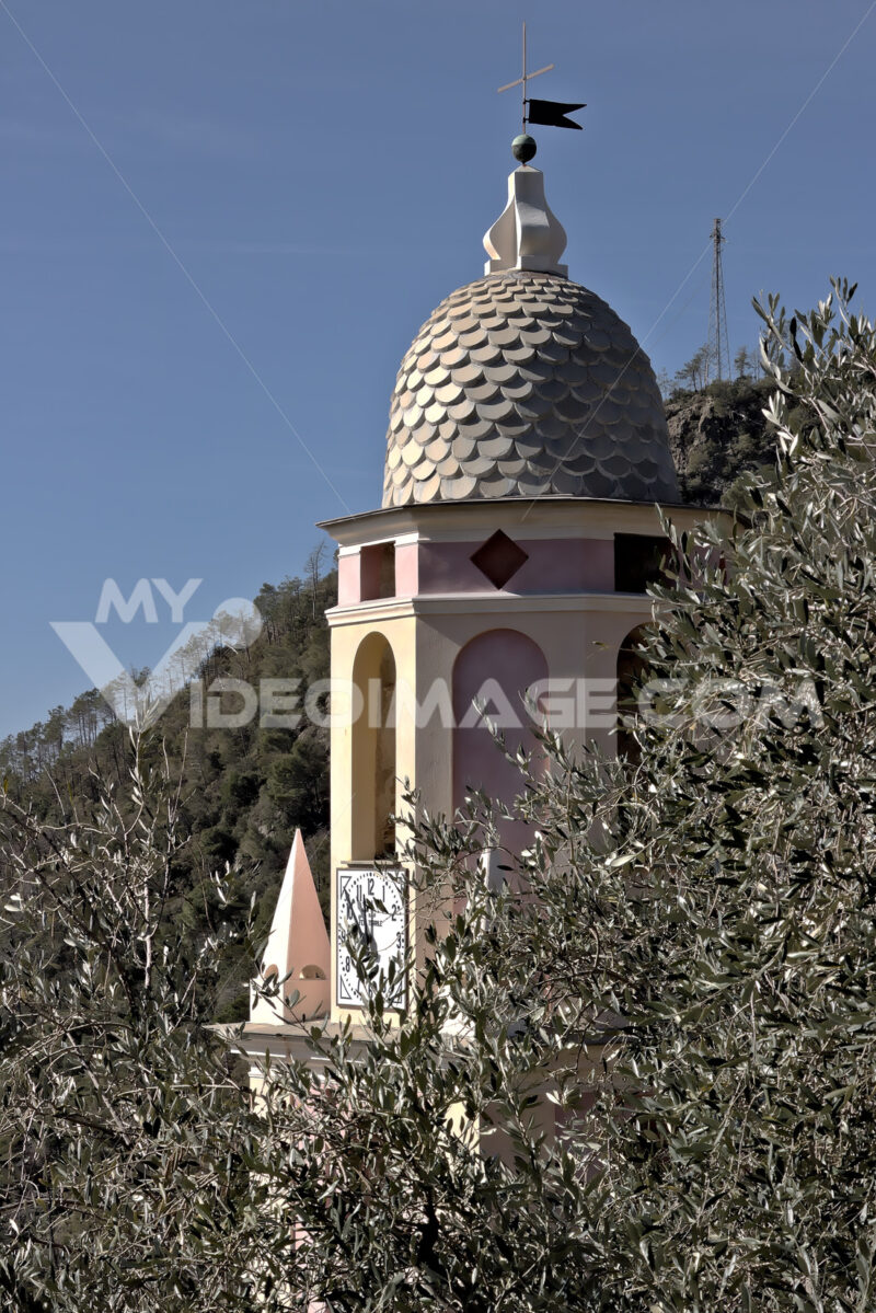 Bell tower among olive trees. A church in the Cinque Terre immersed in an olive grove. - MyVideoimage.com | Foto stock & Video footage
