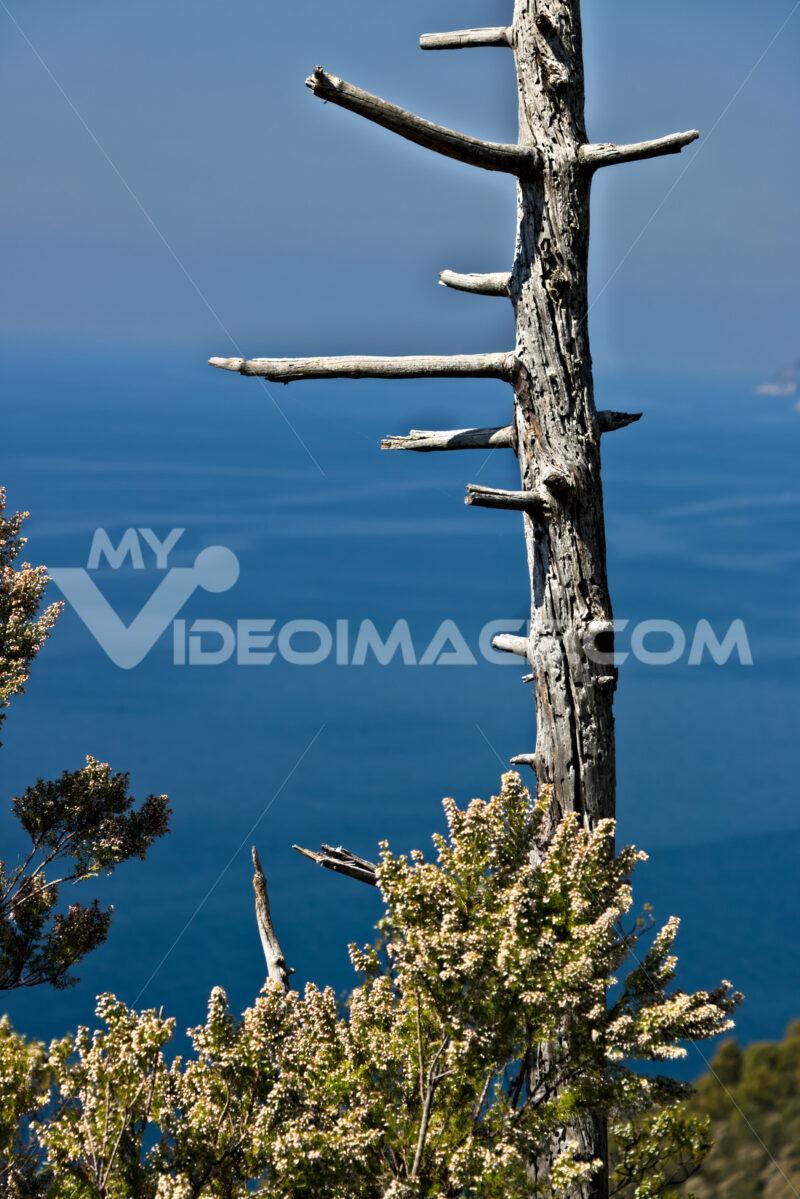 Bonassola, near Cinque Terre, Liguria. A dead tree trunk against - MyVideimage.com