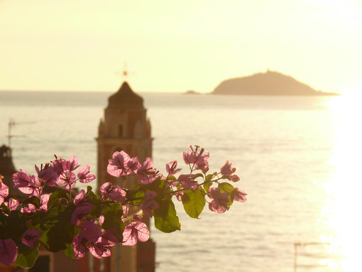 Bougainvillea creeper flowers with the background of the bell tower of the church of Tellaro with the light of sunset. - MyVideoimage.com