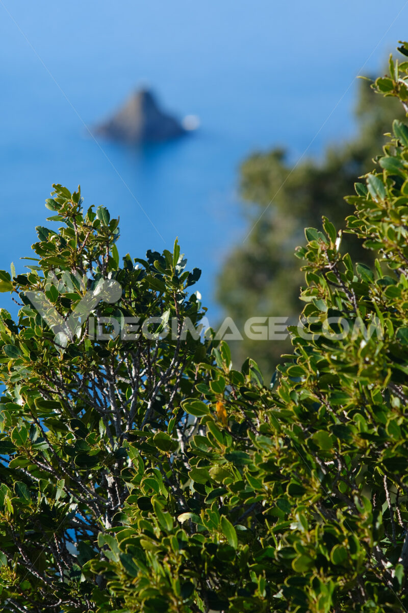 Bush of Mediterranean vegetation and in the background the rock of Ferale at Cinque Terre in Liguria. - MyVideoimage.com
