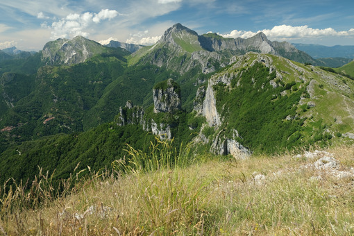 Corchia mountain. Apuan Alps mountains with flower in the foreground. Stock photos. - MyVideoimage.com | Foto stock & Video footage