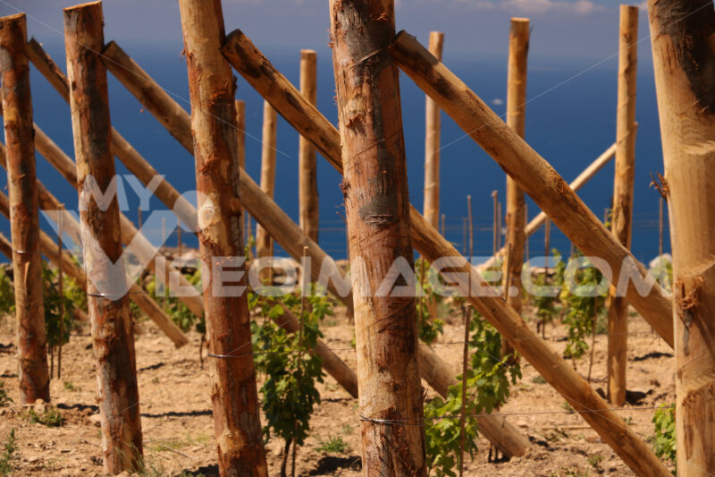 Cultivation of vines on the hills of the Cinque Terre. - LEphotoart.com