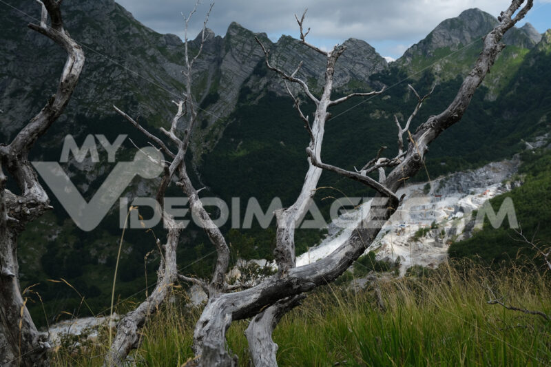 Destruction of the environment. Dry branches of a tree and the mountains destroyed by the marble quarries. Stock photos. - MyVideoimage.com   Foto stock & Video footage