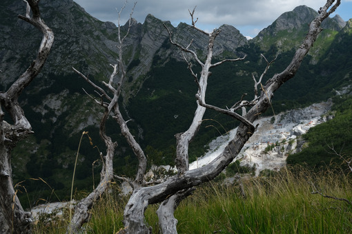 Destruction of the environment. Dry branches of a tree and the mountains destroyed by the marble quarries. Stock photos. - MyVideoimage.com | Foto stock & Video footage