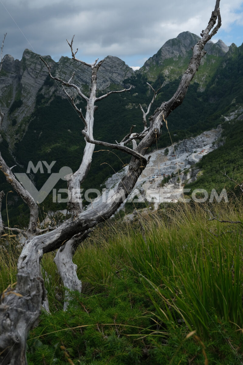 Dry branches. Dry branches of a tree and the mountains destroyed by the marble quarries. Stock photos. - MyVideoimage.com   Foto stock & Video footage