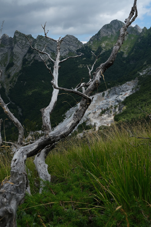 Dry branches. Dry branches of a tree and the mountains destroyed by the marble quarries. Stock photos. - MyVideoimage.com | Foto stock & Video footage