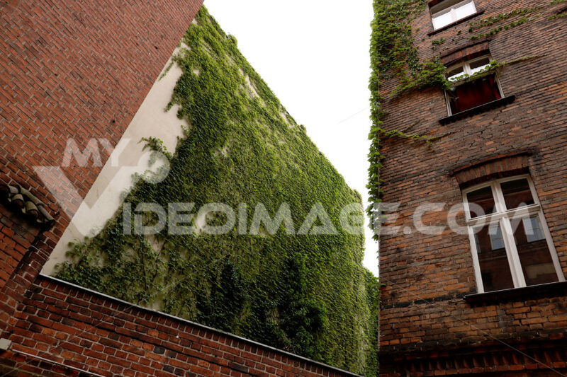 Facade of a palace in Berlin covered with the green af a climbin - MyVideoimage.com