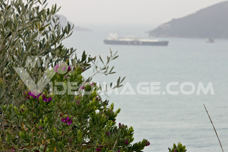 Garden on the sea of the Gulf of La Spezia - MyVideoimage.com | Foto stock & Video footage
