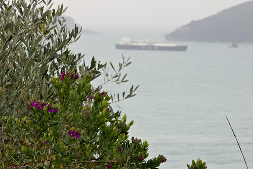 Garden on the sea of the Gulf of La Spezia - MyVideoimage.com