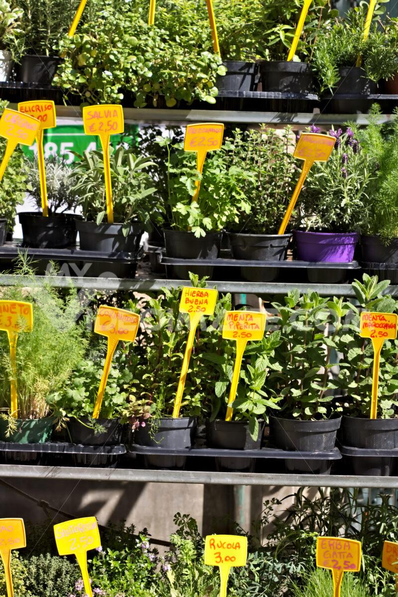 Genoa, Aromatic herbs in pots - MyVideoimage.com | Foto stock & Video footage