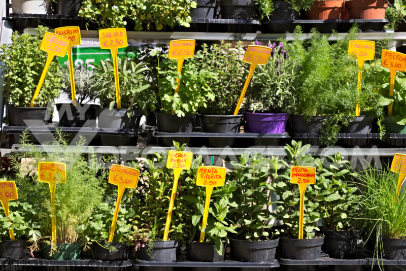 Genoa, Aromatic herbs in pots - MyVideoimage.com | Foto stock & Video footage