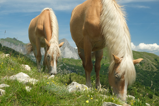Grazing horses. Horses grazing in the mountains of Tuscany. Stock photos. - MyVideoimage.com | Foto stock & Video footage