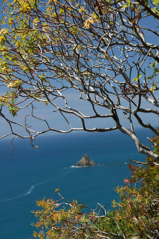 Hills of the Cinque Terre with typical Mediterranean vegetation. Euphorbia. Foto con sfondo mare. - MyVideoimage.com