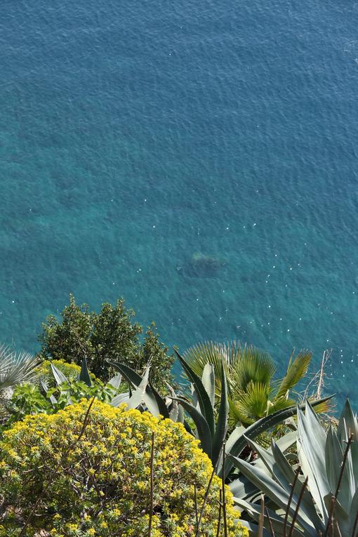 Hills of the Cinque Terre with typical Mediterranean vegetation. Euphorbia. Foto con sfondo mare. - MyVideoimage.com