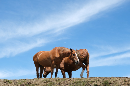 Horses and sky. Horses on top of the mountain with blue sky background. Stock photos. - MyVideoimage.com | Foto stock & Video footage