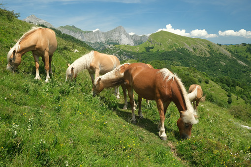 Horses grazing in the mountains of Tuscany. On Monte Matanna in the Apuan Alps. - MyVideoimage.com | Foto stock & Video footage