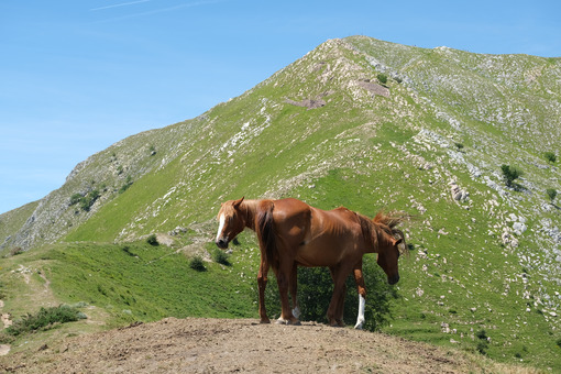Horses in the mountains. Horses grazing in the mountains of Tuscany. Stock photos. - MyVideoimage.com | Foto stock & Video footage