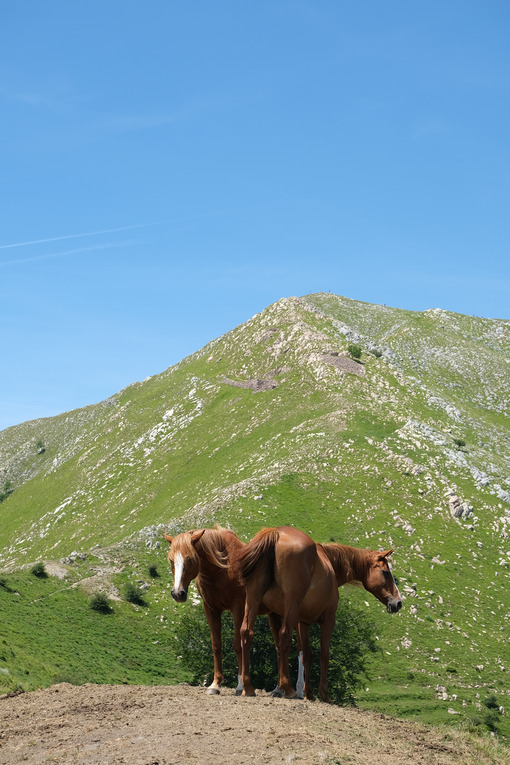 Horses on the mountains. Horses grazing in the mountains of Tuscany. Stock photos. - MyVideoimage.com | Foto stock & Video footage