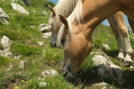 Horses. Horses grazing in the mountains of Tuscany. Stock photos. - MyVideoimage.com | Foto stock & Video footage