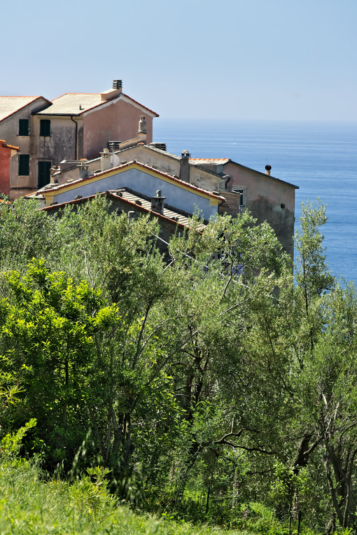 Houses in the village of Framura, near the Cinque Terre. - MyVideimage.com