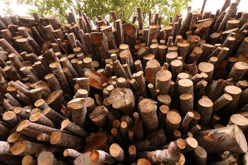 IMG_4038.JPG - MyVideoimage.com   Foto stock & Video footage