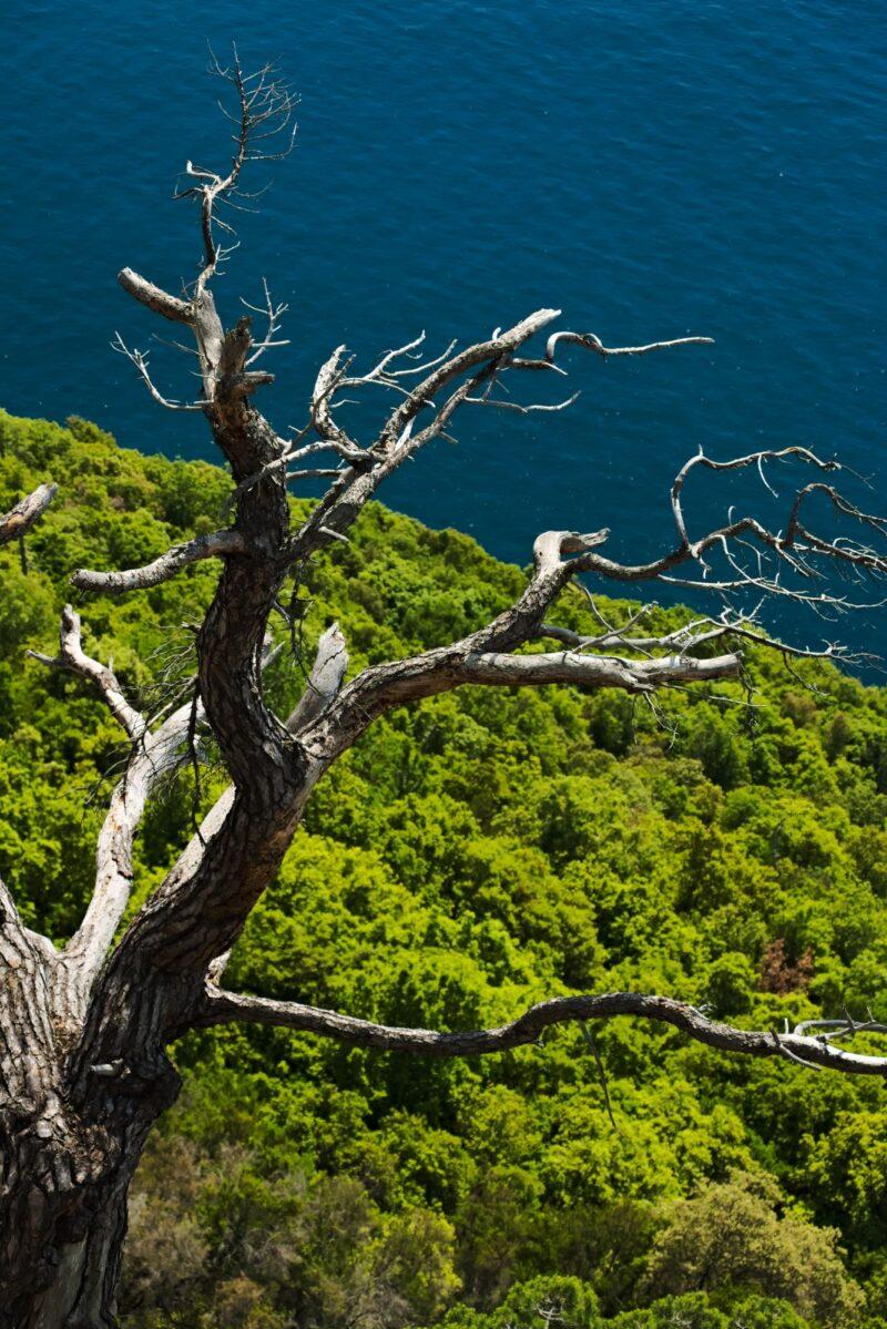 Alberi sul mare di Monterosso alle Cinque Terre in una fotografia d'arte di Paolo Grassi