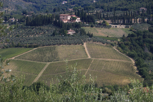 Landscape of the Chianti hills with vineyard cultivation. Ancient Vignamaggio villa in Greve in Chianti with rows of vines. - MyVideoimage.com