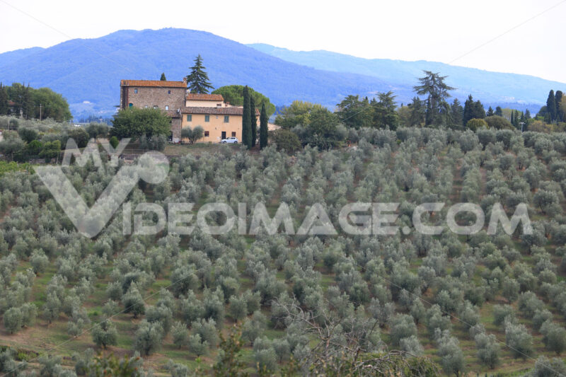 Landscape of the Chianti hills with vineyard cultivation.  Cultivation of vines and olive trees near Florence. Tuscany. - MyVideoimage.com | Foto stock & Video footage