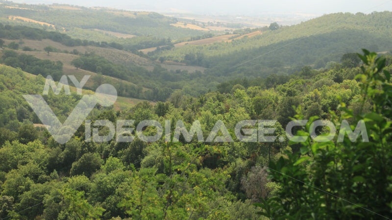 Landscape with forest and green trees in the hills of the Tuscan - MyVideoimage.com