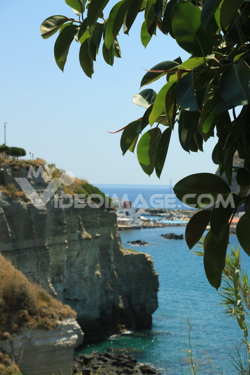 Leaves of a ficus plant. In the background the sea and the rocks - MyVideoimage.com
