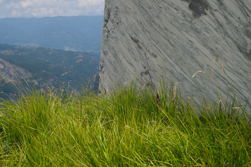 Marble block. Block of white veined marble resting on a green lawn in the Apuan Alps. Stock photos. - MyVideoimage.com | Foto stock & Video footage