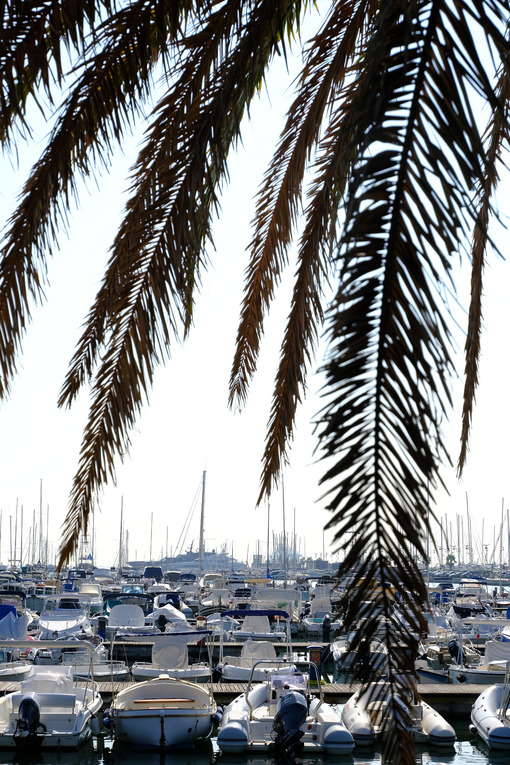 Marina. Boats in the marina with palm leaves. Stock photos. - MyVideoimage.com | Foto stock & Video footage