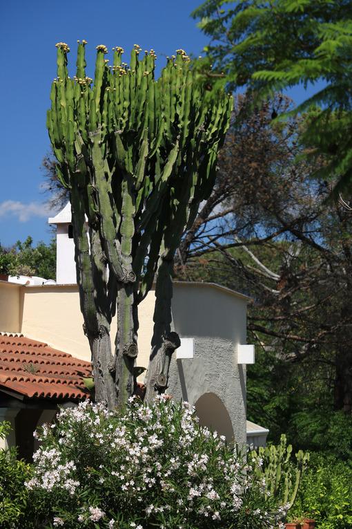 Mediterranean style home garden. Cactus and flower plant. Ischia - MyVideoimage.com