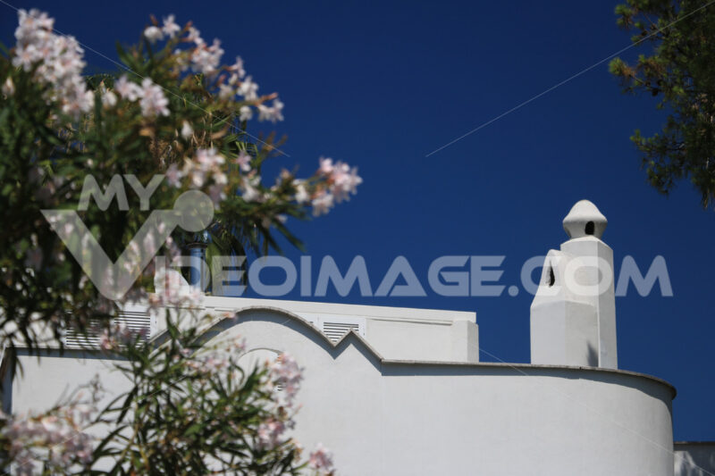 Mediterranean style house painted white. Chimneys with blue sky background. Close up with oleander bush in bloom. Ischia, near Naples, Italy. - MyVideoimage.com