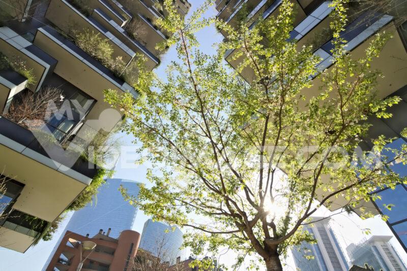"Milan March 21 2019. ""Bosco Verticale"" skyscrapers built in Milan between the Isola district and Porta Garibaldi. - LEphotoart.com"