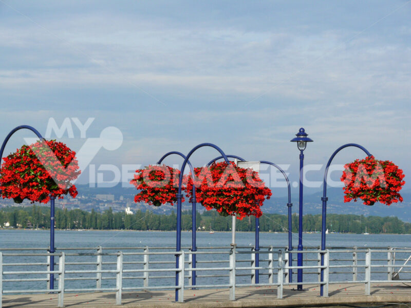 Morges, Switzerland. Vases of red flowers in the city on Lake Ge - MyVideoimage.com