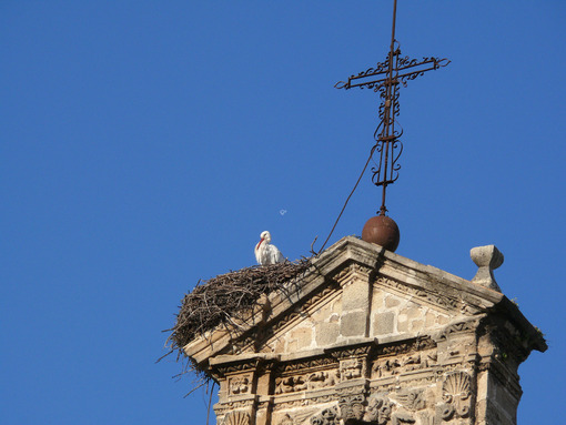 Nest of storks on the top of a bell tower. - MyVideoimage.com