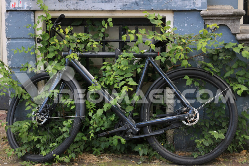 Old bicycle half-hidden by leaves of a climbing plant. - MyVideoimage.com