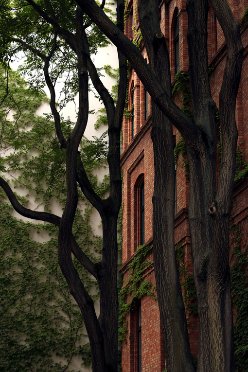 Old building with brick facade with trees - MyVideoimage.com