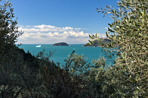 Olive grove and garden with sea view. - MyVideoimage.com