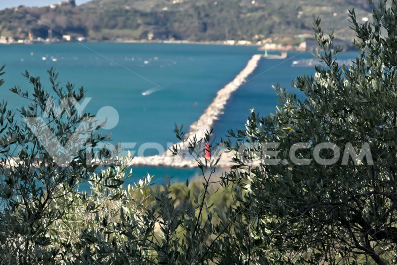Olive grove and garden with sea view. - MyVideoimage.com | Foto stock & Video footage