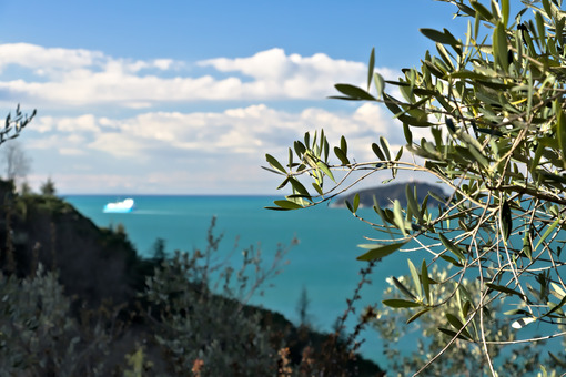 Olive grove and garden with sea view. - LEphotoart.com