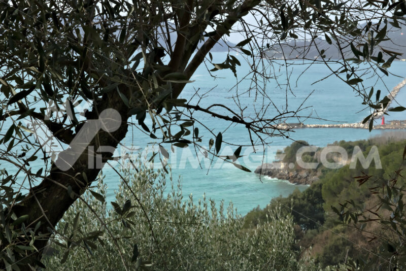 Olive leaves on the background of the cliff - MyVideoimage.com | Foto stock & Video footage